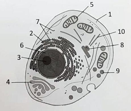Imagen del examen de biología de Selectividad de junio 2019 en Andalucía