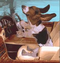 basstehound.jpg