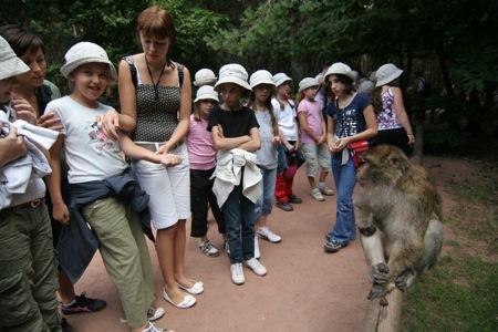 Les singes en liberté à la rencontre des enfants