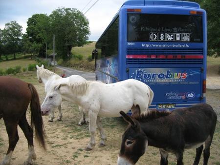 Les chevaux en liberté