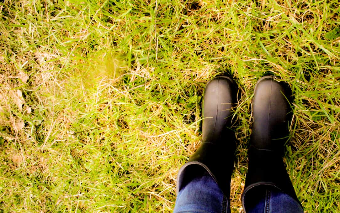 My Shiny new Gumboots. The latest in Farm Fashion Accessories.