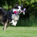 Benefits of having a playful dog