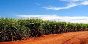 Sugarcane for Ethanol