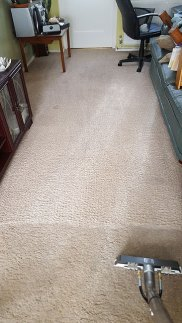 cleaning-solution-carpet-2