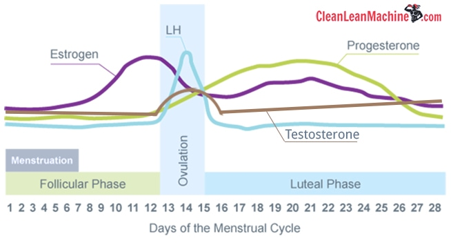 Female Hormones and Exercise - Estrogen, Progesterone, LH and Testosterone levels during follicular phase, ovulation and luteal phase of menstrual cycle