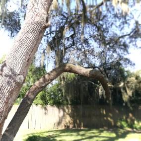 Residence Exterior-Tree