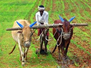 biogas-rural-development