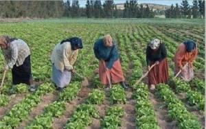rural-women-palestine