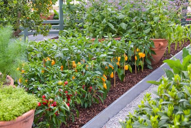 energy-efficient-garden
