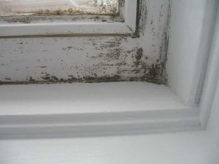 mold-infestation
