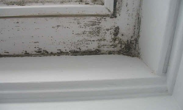 mold-infestation