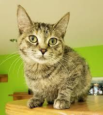 types-of-cat-litter
