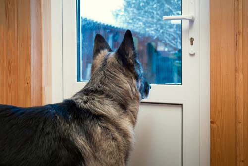 Reasons Why You Should Invest In An Electronic Dog Door