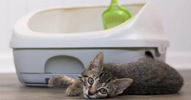 Odorless Pet Litter Box