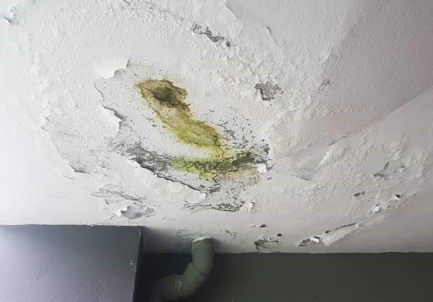 mold-proliferation