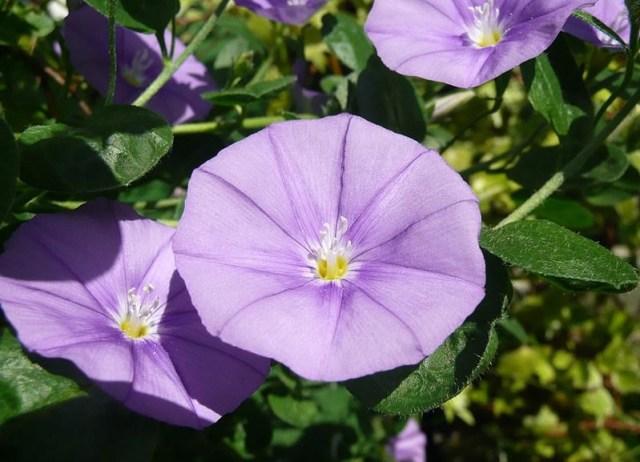 flowering-plants-home-garden