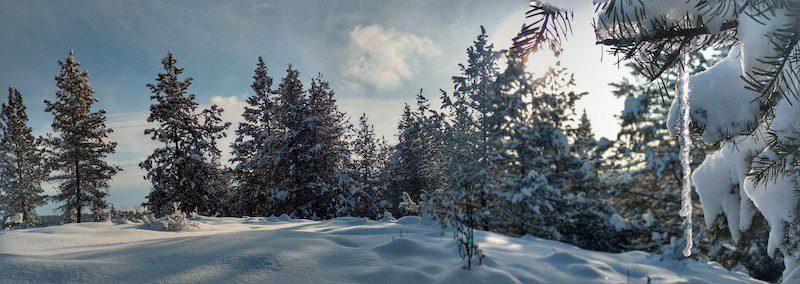 White winter landscape