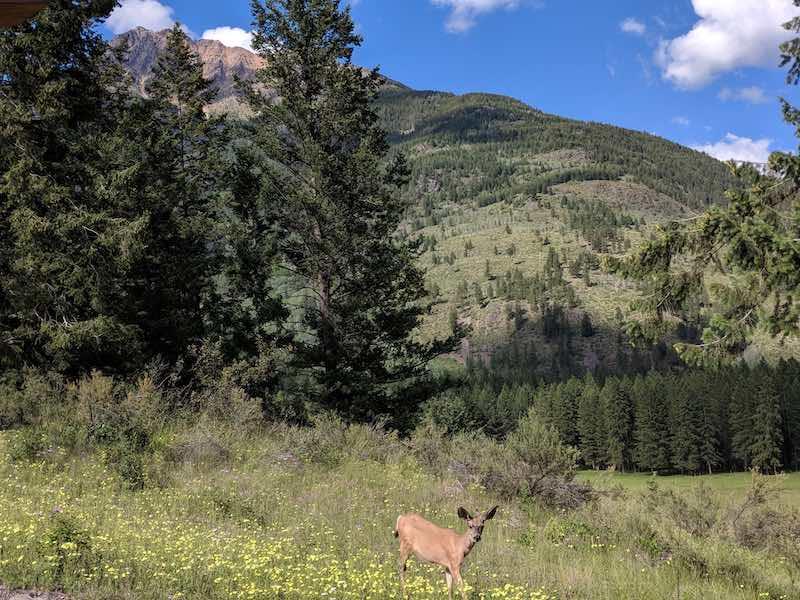 deer walking near Bull Mountain