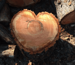 tree trunk in shape of heart