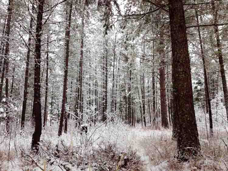 Snowy Forest Glade at Clear Sky Meditation Center