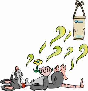 Eliminate Dead Rodent Odors Remove Dead Mouse Smells