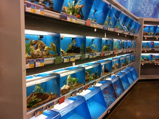 Feeder Fish Petsmart