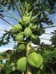 Fruits_Veg