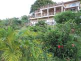 Native plants around the resort