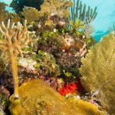 LR_Reef