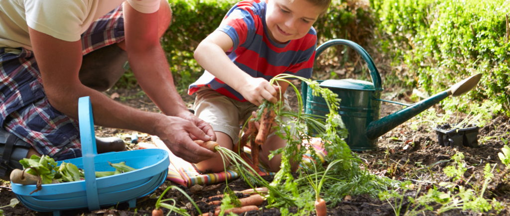 Growing Your Own Fruits And Vegetables Clearway