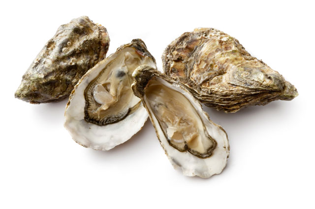 oyster-group