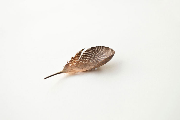Feather-11,888