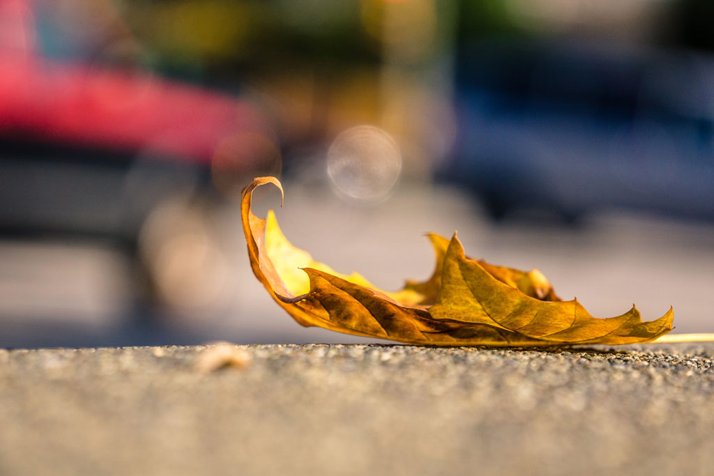 THE-COLOR-YELLOW,-LOVE,-THE-FALL-OF-LEAVES-IN-AUTUMN