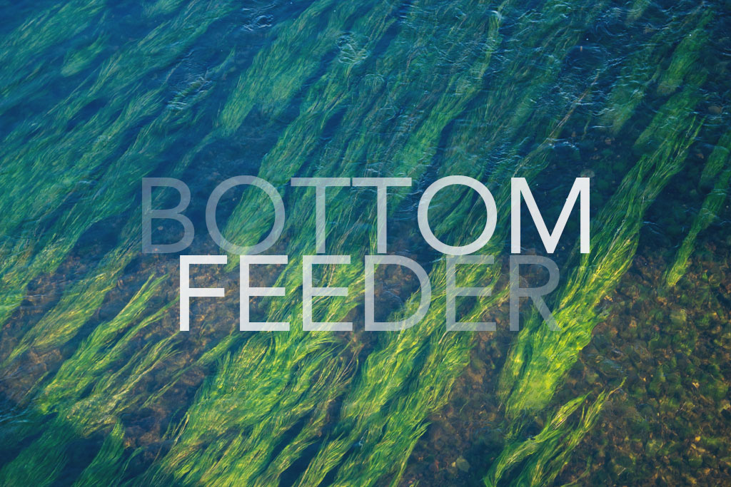 BOTTOM FEEDER by Dylan Krieger