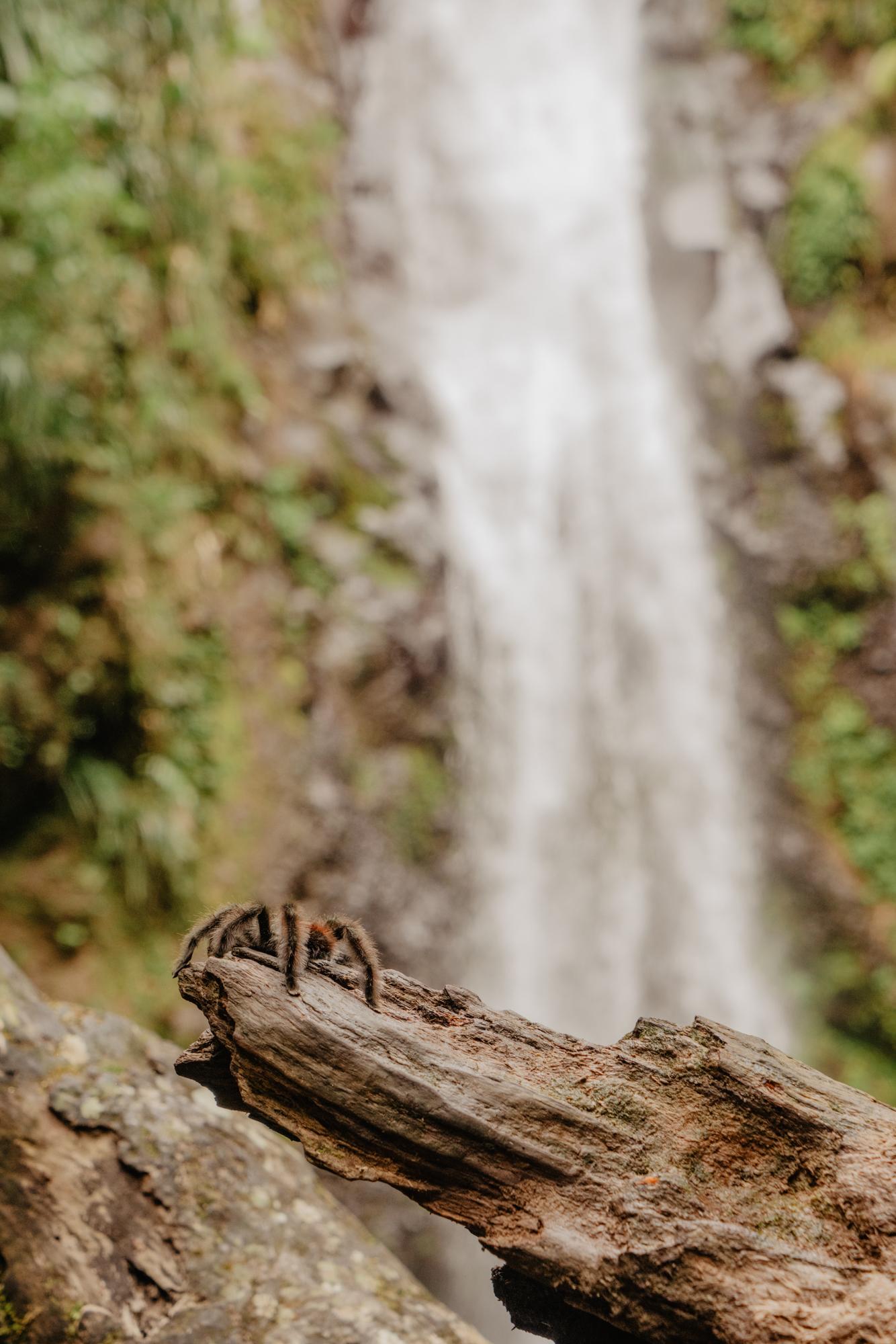 Matoutou falaise, cascade Didier, Martinique