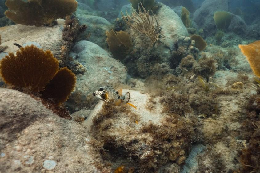 Randonnée sous-marine du Cap Salomon, Martinique