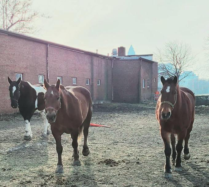 Mounted Unit horses Larry Jim and Jack
