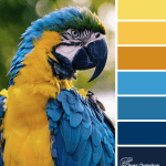 Dancing Macaw colour scheme from Clever Chameleon