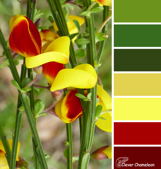 English Broom color scheme from Clever Chameleon