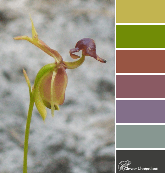 Flying Duck Orchid colour scheme from Clever Chameleon