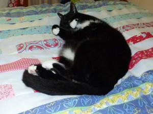 cat on Regatta Quilt