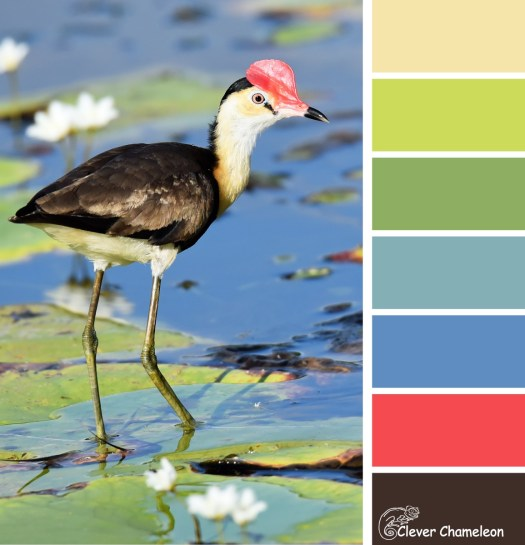 Jacana colour scheme by Clever Chameleon