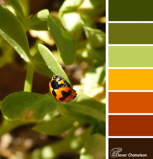 Ladybug colour board at Clever Chameleon