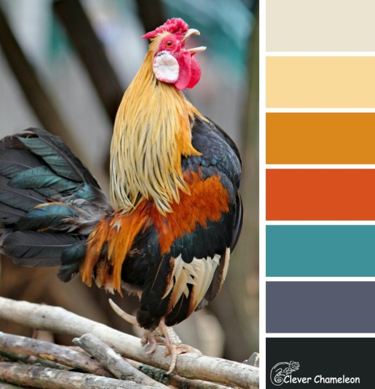 Rooster colour board at Clever Chameleon from a photo by Dusan Ssmetana on Unsplash