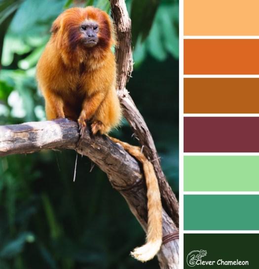 Golden Lion Tamarin monkey colours at Clever Chameleon