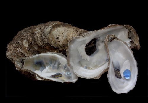 photograph of oyster shells by Nancy Rich