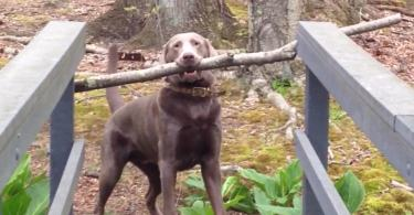 Adorable Dog Thinks Through a Hilarious Problem