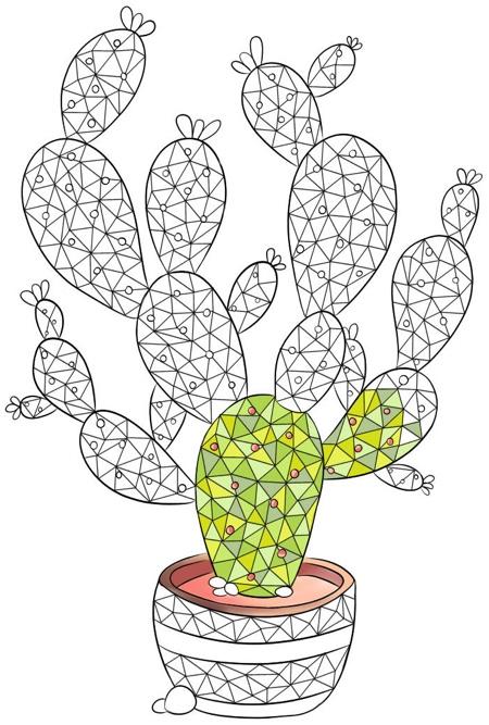 Best Succulent Cactus Coloring Books Pages Cleverpedia