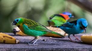 Fotografando no Sítio Espinheiro Negro - Aves - Birdwatching 02