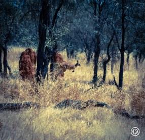 AUSTRALIA INSTANT ROAD-TRIP BY ®-23